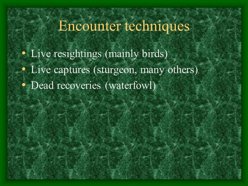 Encounter techniques Live resightings (mainly birds)