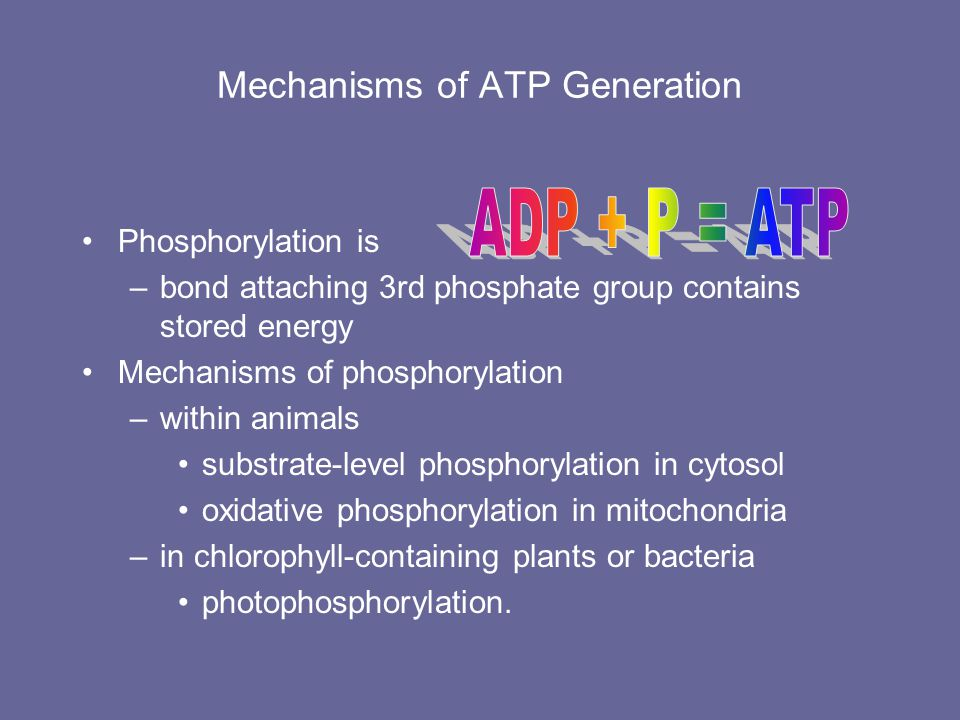Mechanisms of ATP Generation