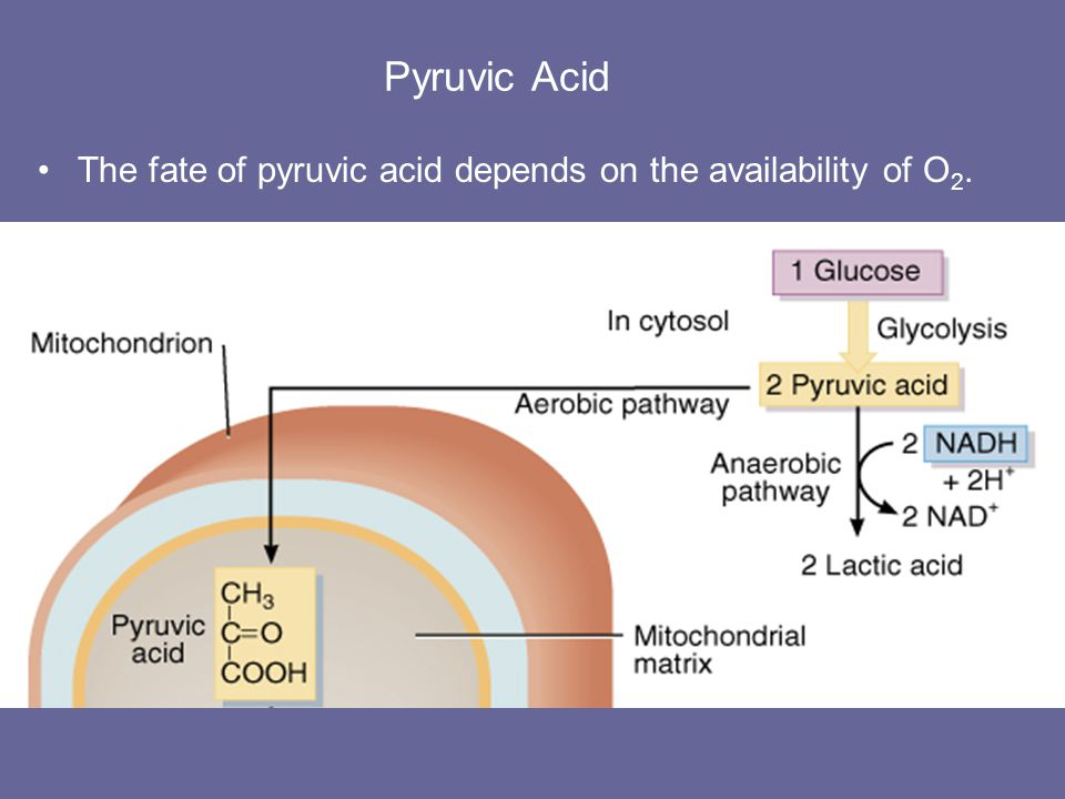 Pyruvic Acid The fate of pyruvic acid depends on the availability of O2.
