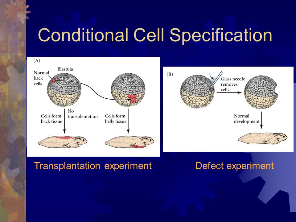Conditional Cell Specification
