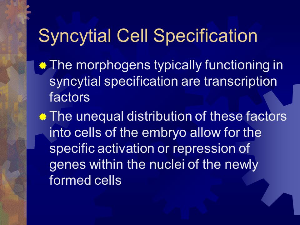 Syncytial Cell Specification