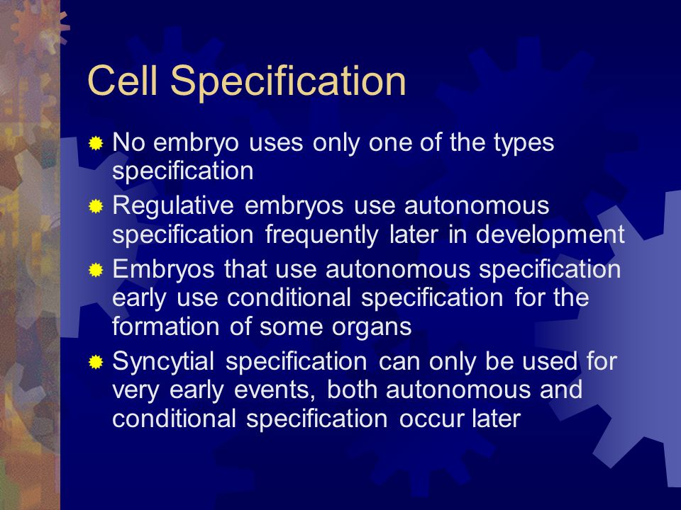 Cell Specification No embryo uses only one of the types specification