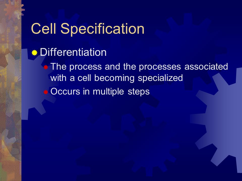 Cell Specification Differentiation