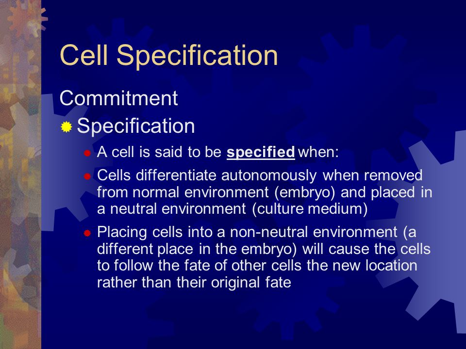Cell Specification Commitment Specification