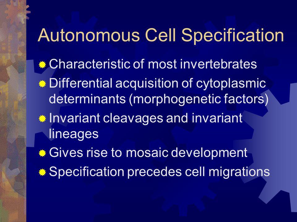 Autonomous Cell Specification