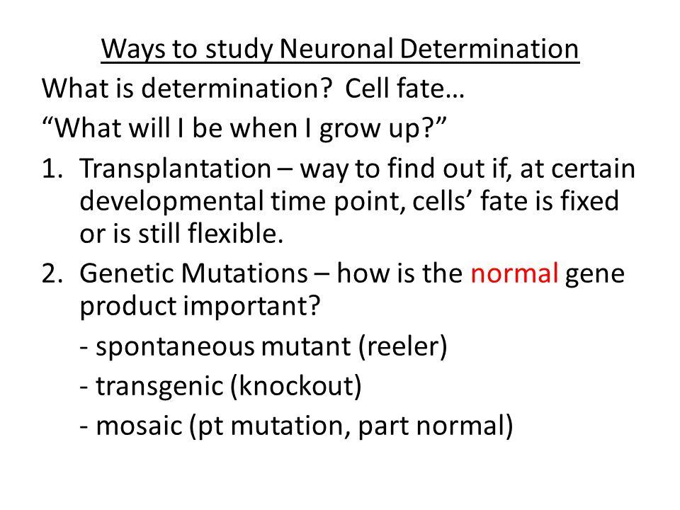 Ways to study Neuronal Determination