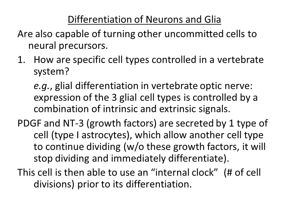 Differentiation of Neurons and Glia