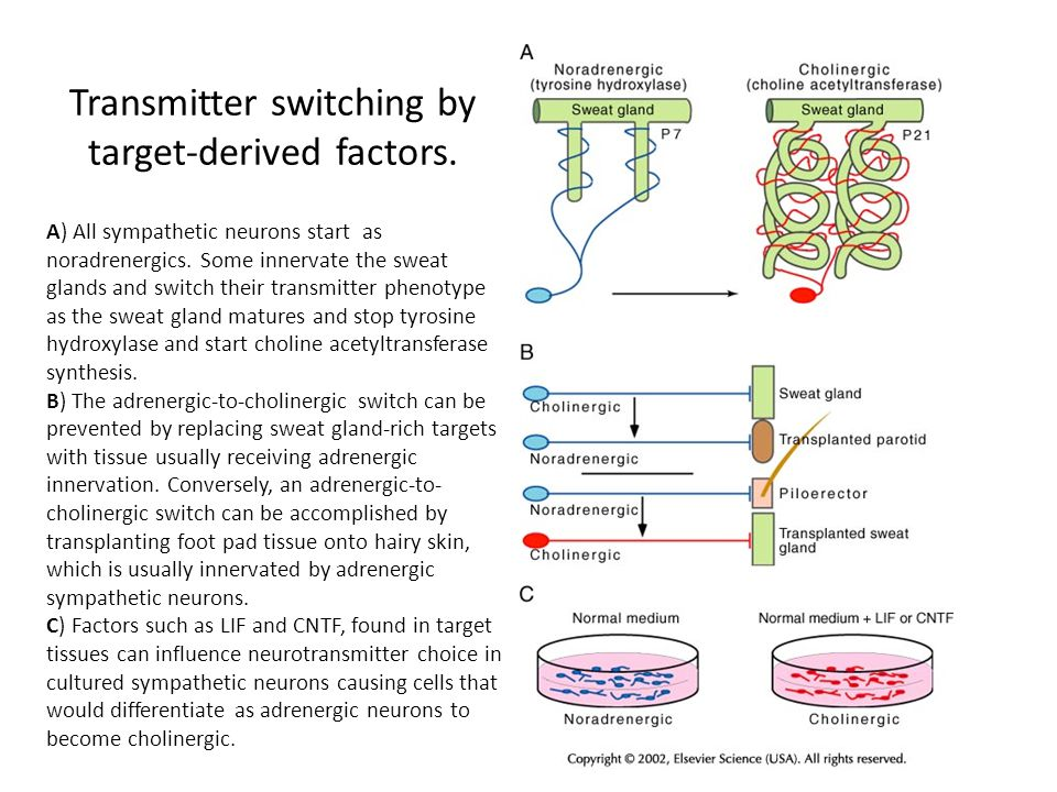 Transmitter switching by target-derived factors.