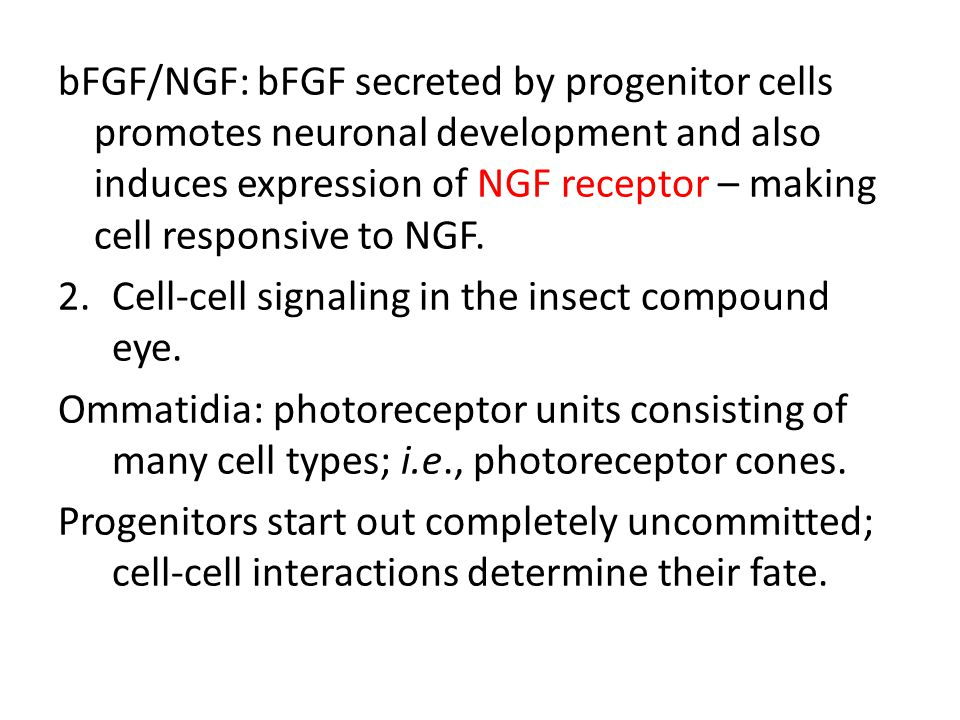 bFGF/NGF: bFGF secreted by progenitor cells promotes neuronal development and also induces expression of NGF receptor – making cell responsive to NGF.