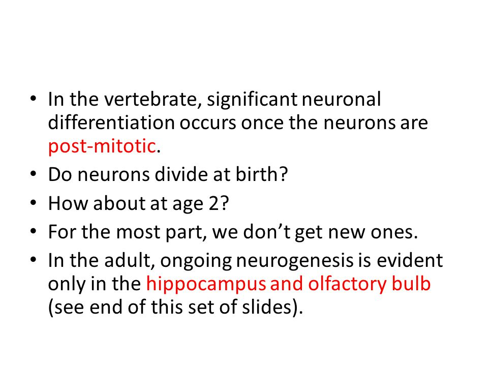In the vertebrate, significant neuronal differentiation occurs once the neurons are post-mitotic.