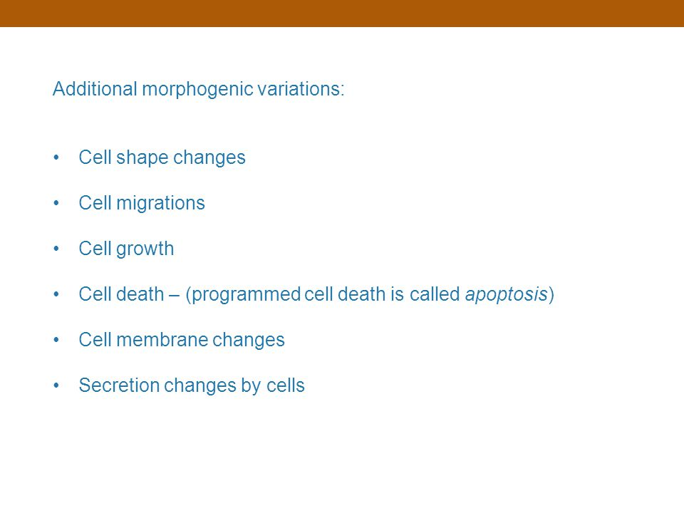 Additional morphogenic variations: