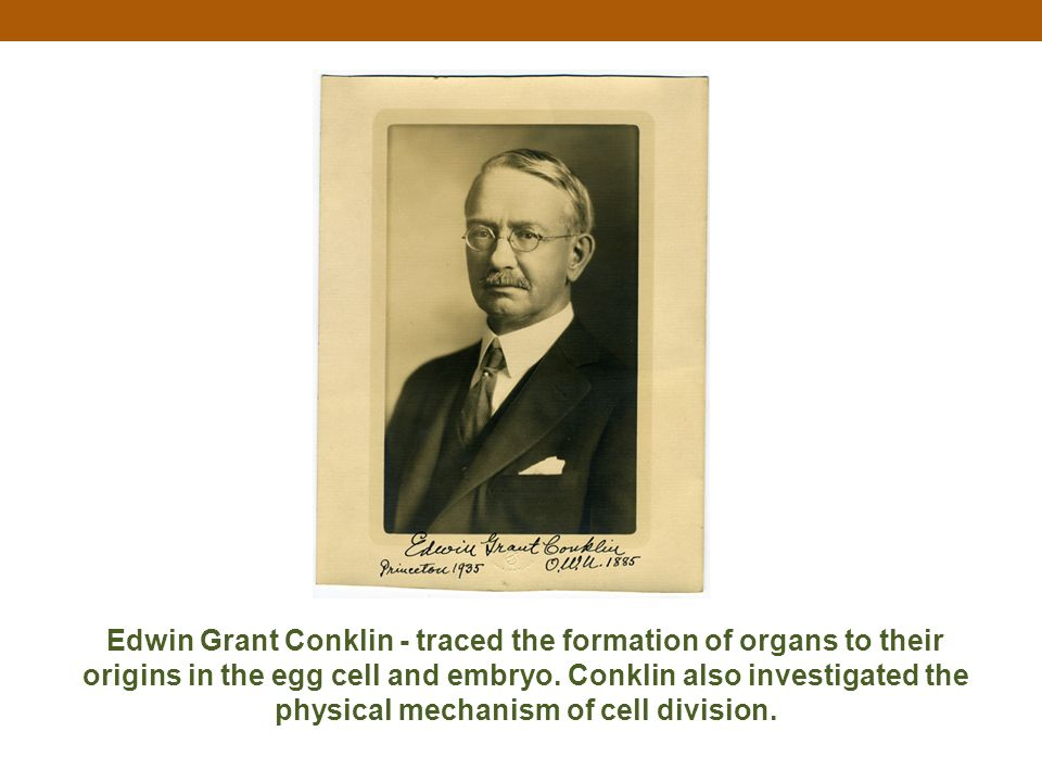 Edwin Grant Conklin - traced the formation of organs to their origins in the egg cell and embryo.