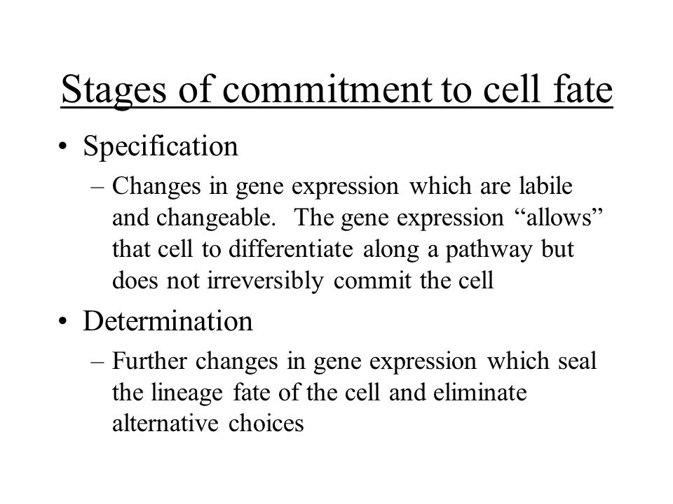 Stages of commitment to cell fate