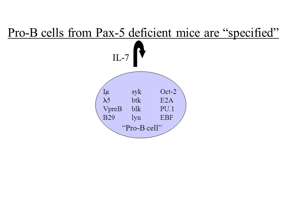 Pro-B cells from Pax-5 deficient mice are specified