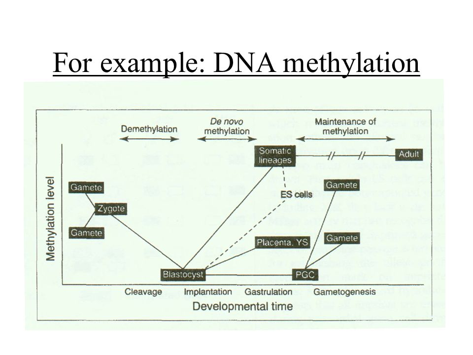 For example: DNA methylation