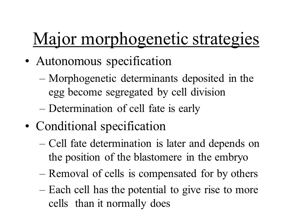Major morphogenetic strategies