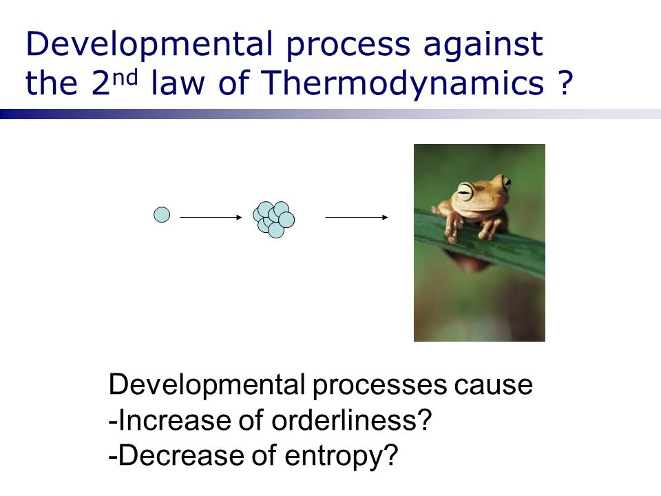 Developmental process against the 2nd law of Thermodynamics