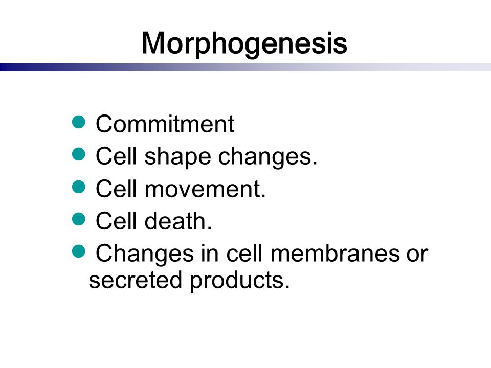 Morphogenesis Commitment Cell shape changes. Cell movement.