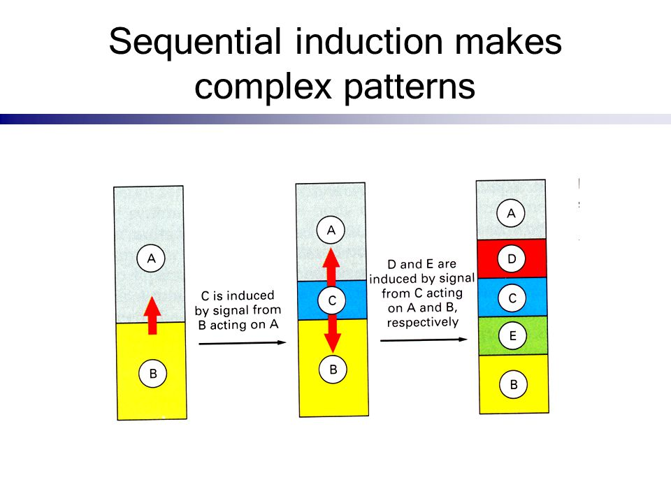 Sequential induction makes complex patterns