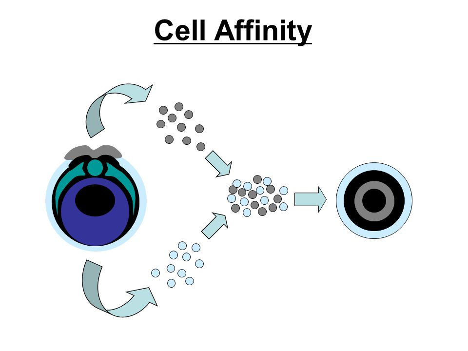 Cell Affinity