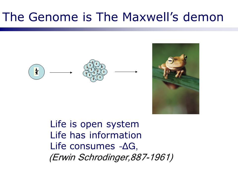 The Genome is The Maxwell's demon