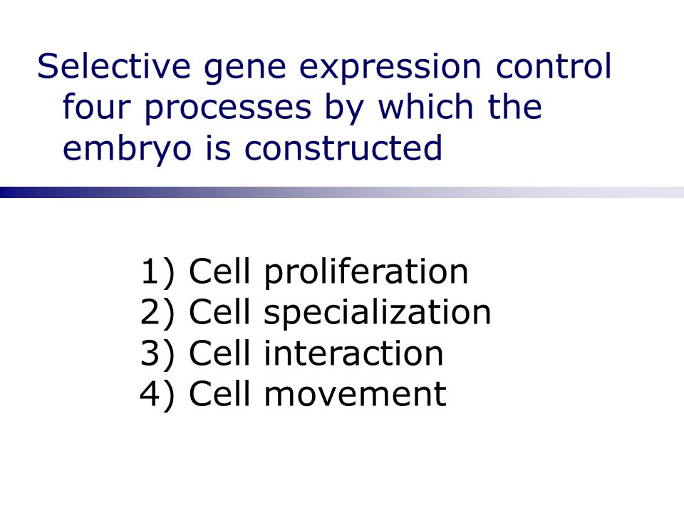 Selective gene expression control four processes by which the embryo is constructed