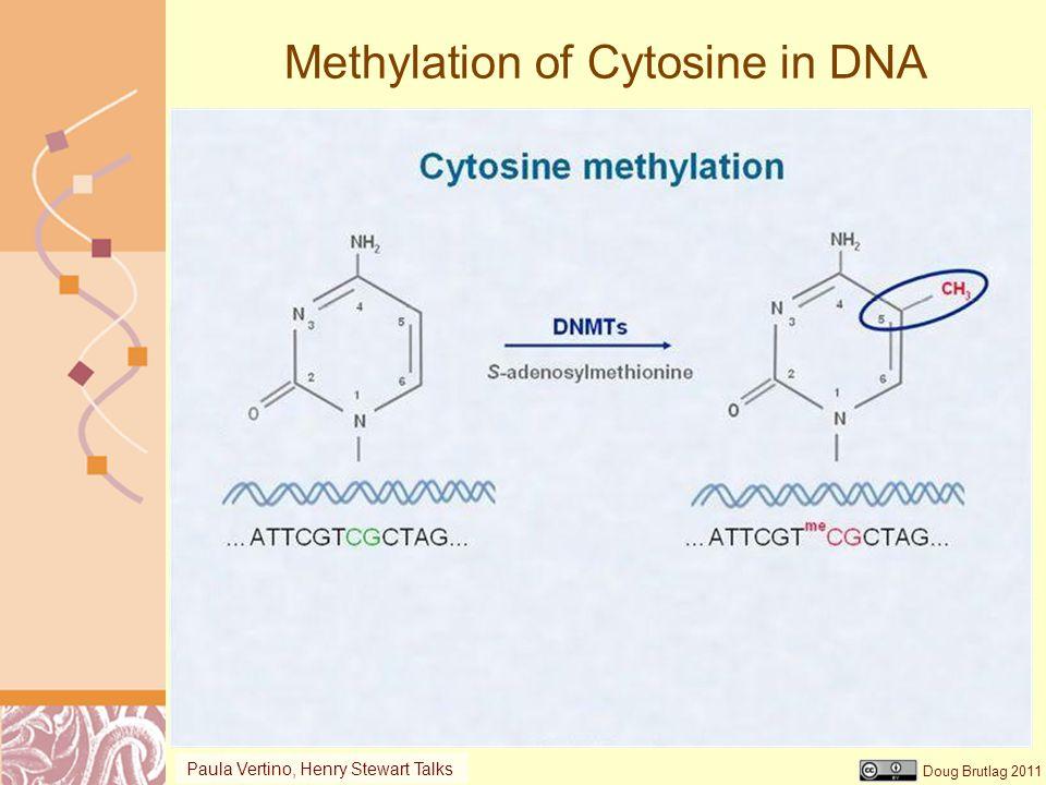 Methylation of Cytosine in DNA