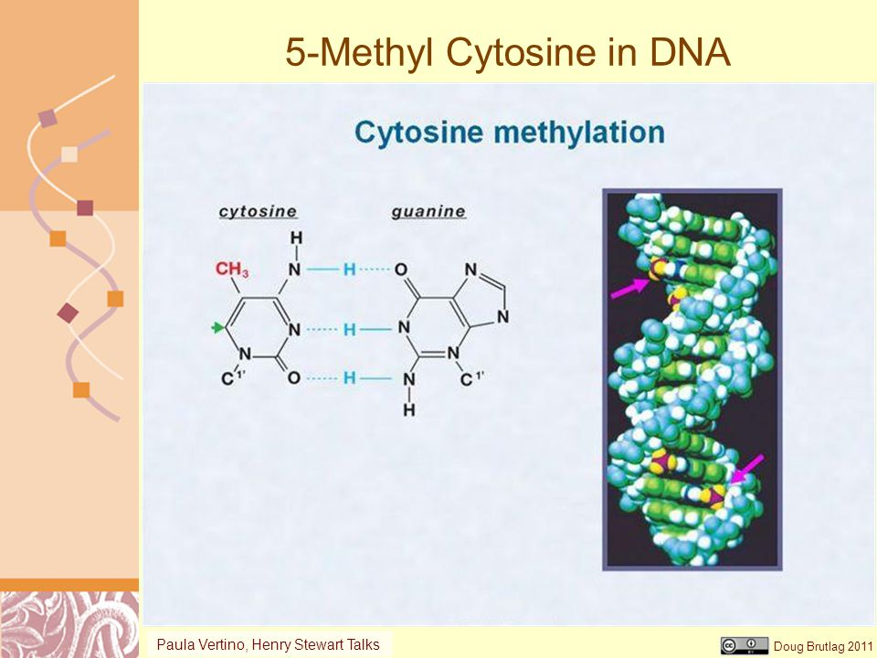 5-Methyl Cytosine in DNA