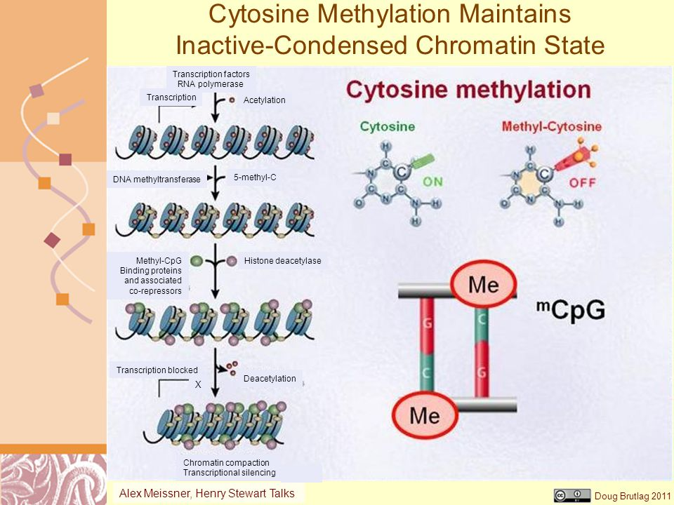 Cytosine Methylation Maintains Inactive-Condensed Chromatin State