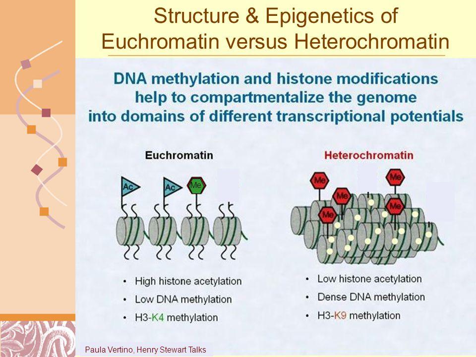 Structure & Epigenetics of Euchromatin versus Heterochromatin