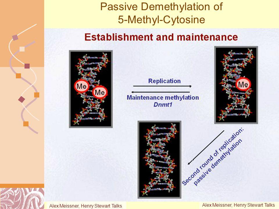 Passive Demethylation of 5-Methyl-Cytosine