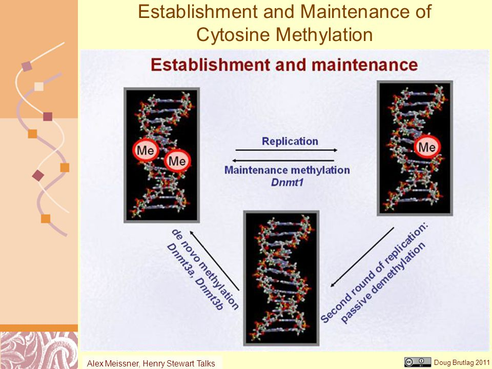 Establishment and Maintenance of Cytosine Methylation