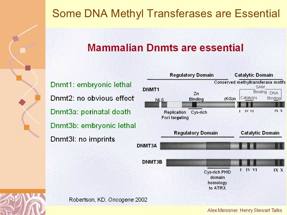 Some DNA Methyl Transferases are Essential