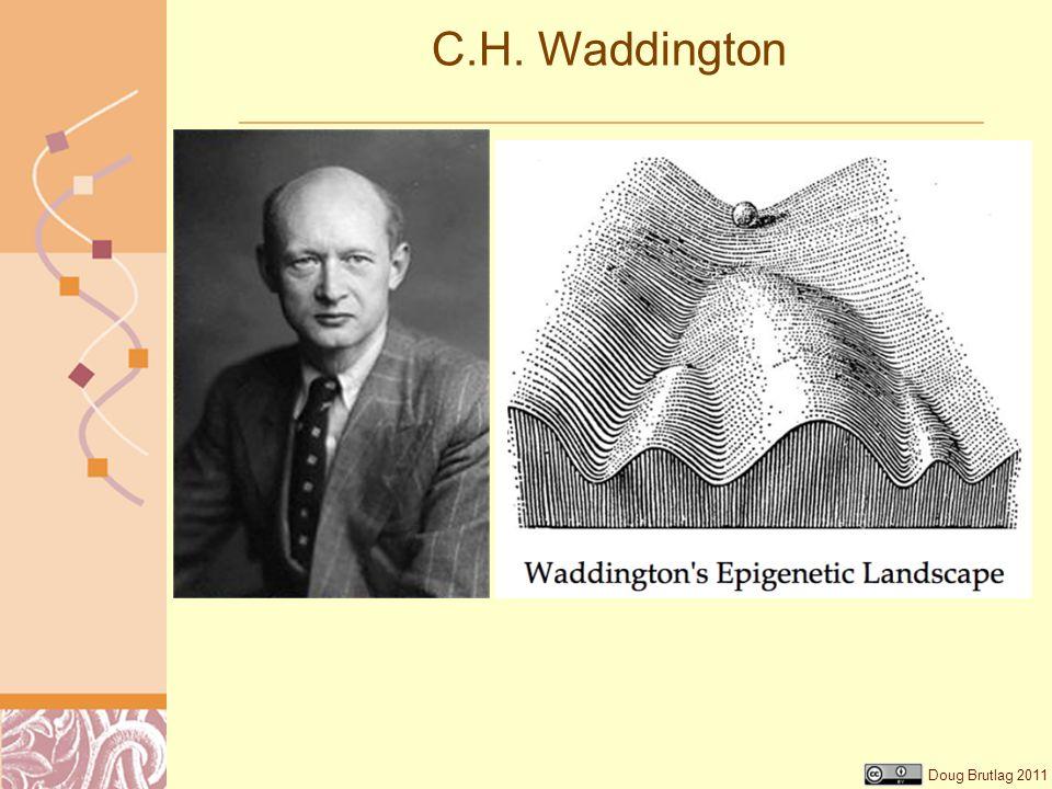 C.H. Waddington