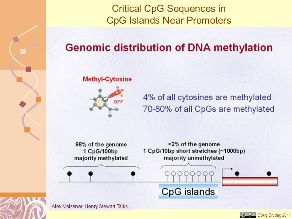 Critical CpG Sequences in CpG Islands Near Promoters