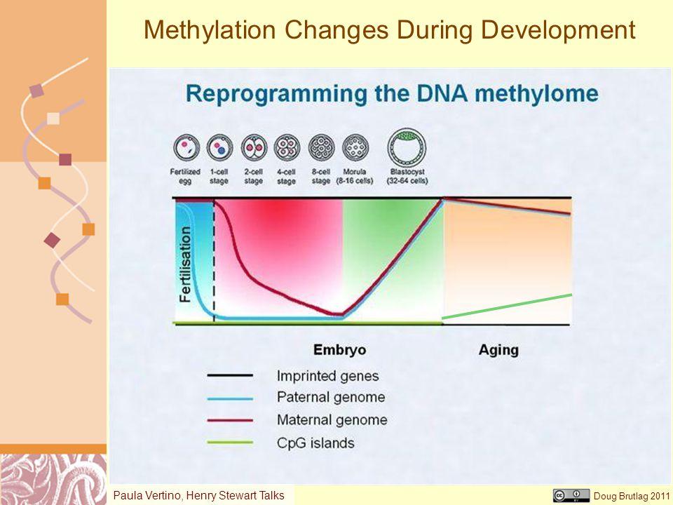 Methylation Changes During Development