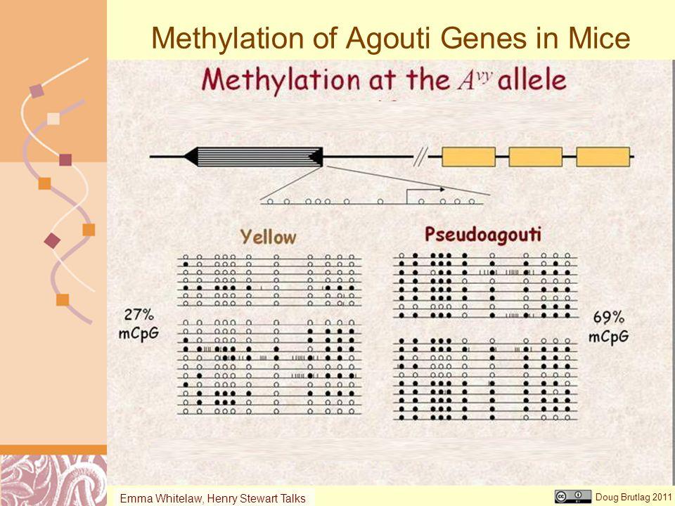 Methylation of Agouti Genes in Mice
