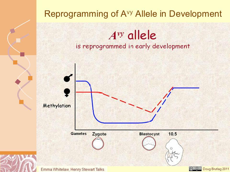 Reprogramming of Avy Allele in Development