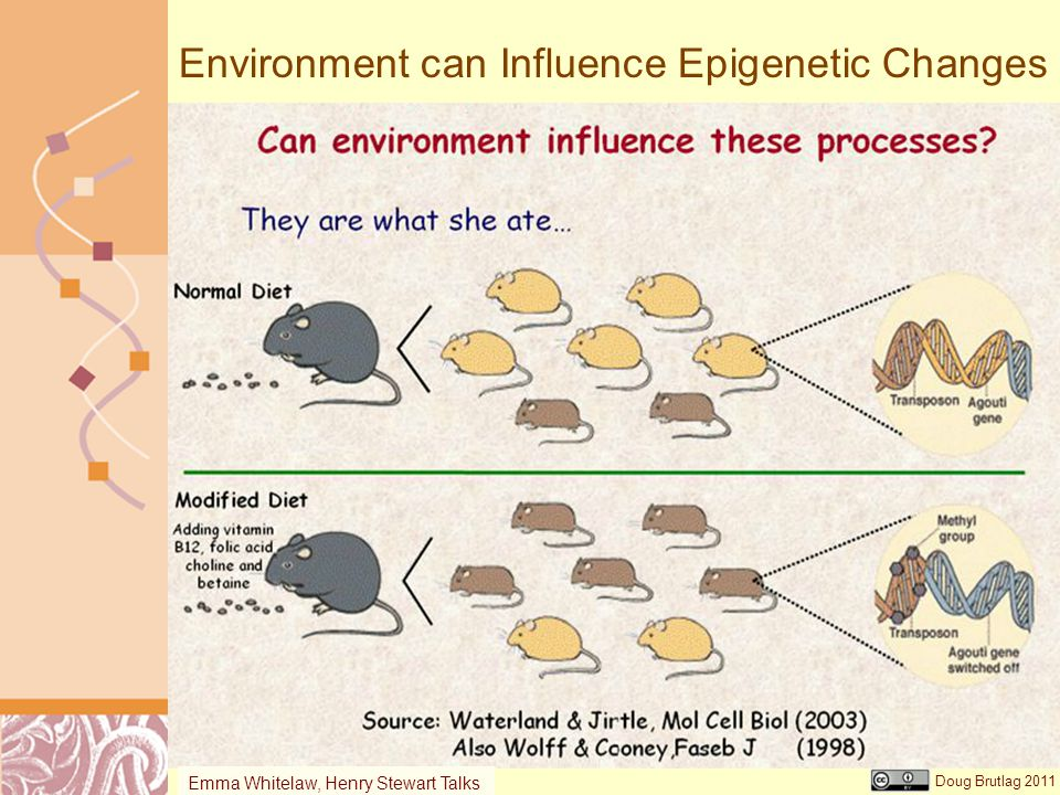 Environment can Influence Epigenetic Changes