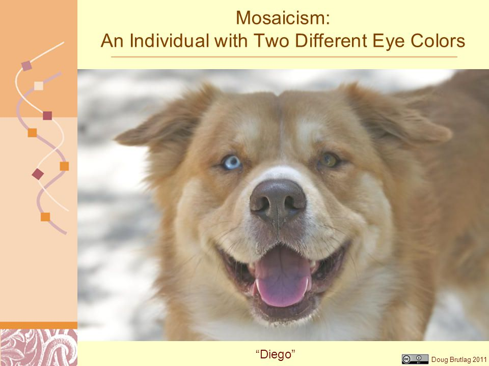 Mosaicism: An Individual with Two Different Eye Colors