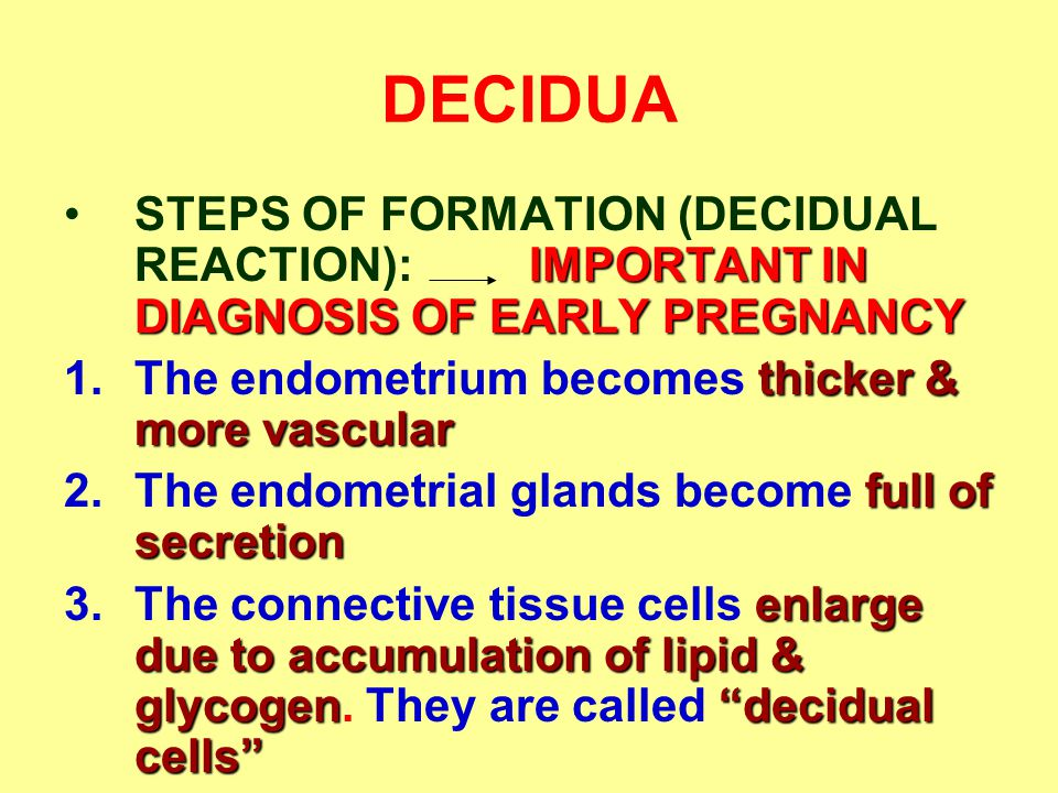 DECIDUA STEPS OF FORMATION (DECIDUAL REACTION): IMPORTANT IN DIAGNOSIS OF EARLY PREGNANCY. The endometrium becomes thicker & more vascular.