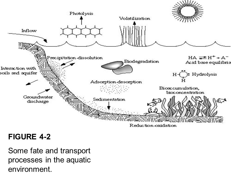 FIGURE 4-2 Some fate and transport processes in the aquatic environment.