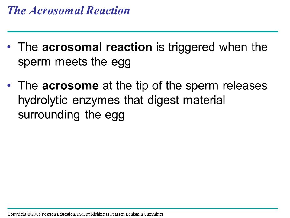 The Acrosomal Reaction