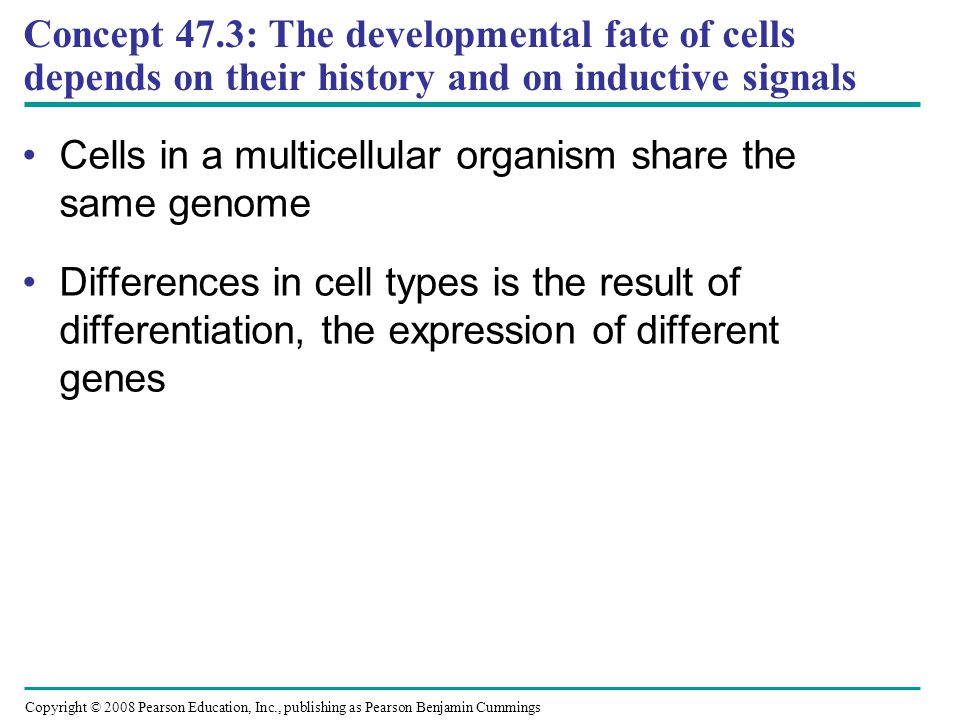 Concept 47.3: The developmental fate of cells depends on their history and on inductive signals