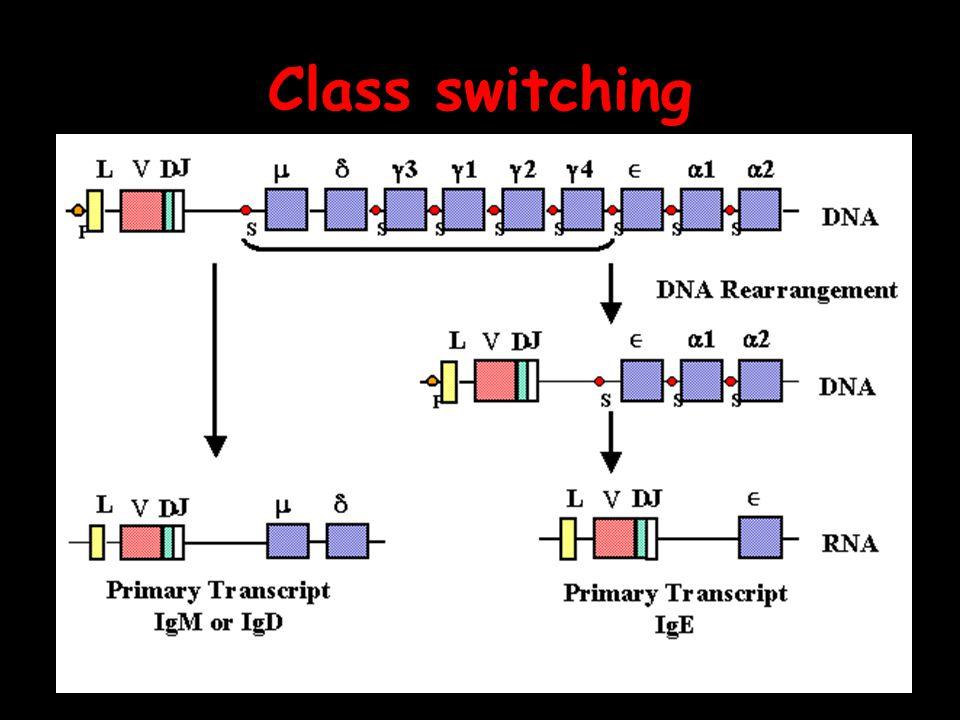 Class switching