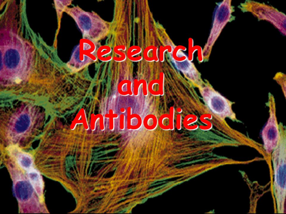 Research and Antibodies