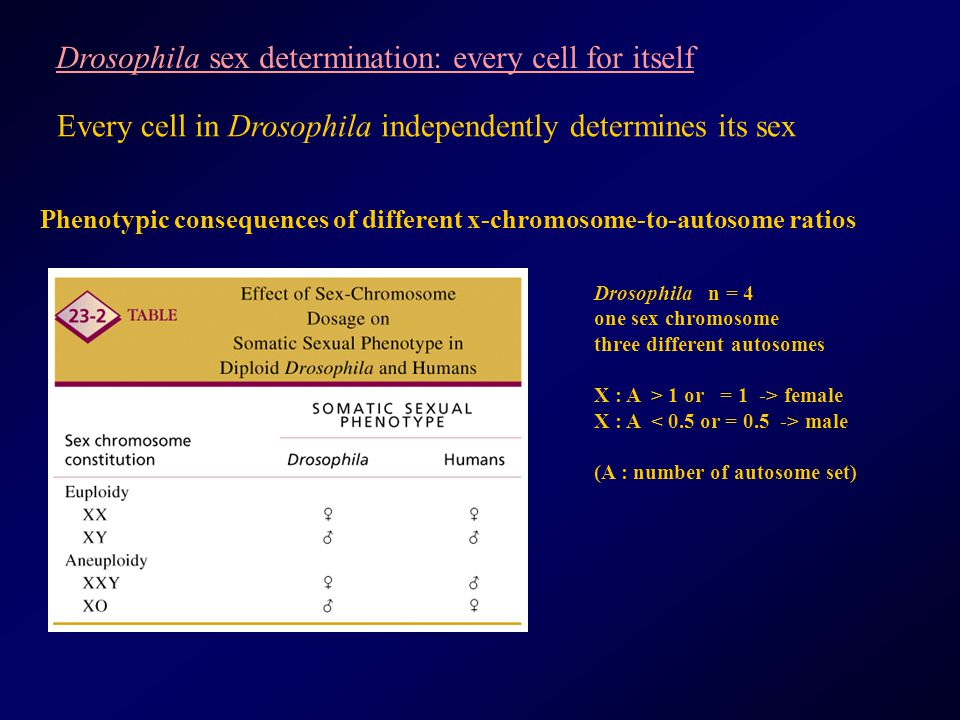 Drosophila sex determination: every cell for itself