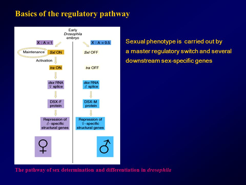 Basics of the regulatory pathway