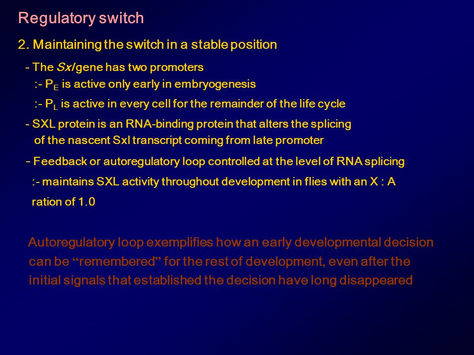 Regulatory switch 2. Maintaining the switch in a stable position