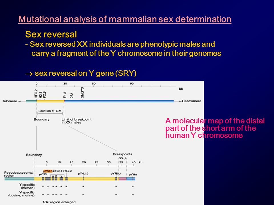 Mutational analysis of mammalian sex determination